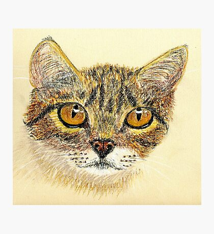 Ticked Tabby Photographic Print