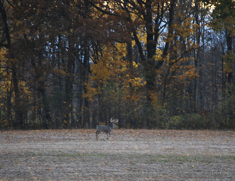 The Last Stroll Before Hunting Season by deb cole