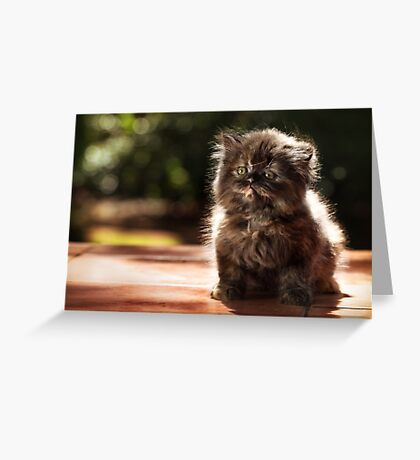 ...and whiskers on kittens... Greeting Card