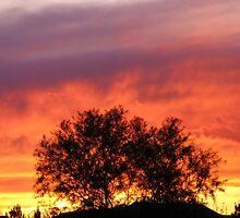 Fire in the New Mexico Sky by CynLynn