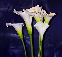 Lilies - The Hotel at Mandalay Bay by John Absher