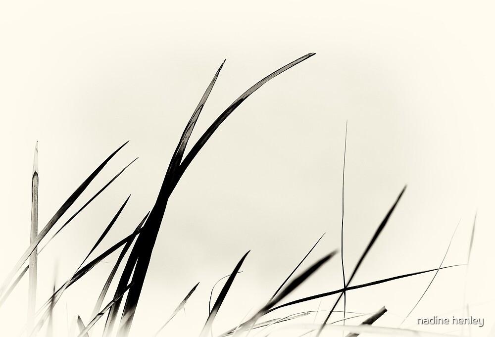 beach grass calligraphy by nadine henley