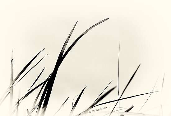 beach grass calligraphy by nadine henley