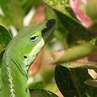 Anole Close Up by JeffeeArt4u