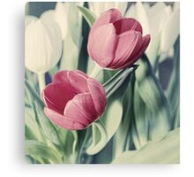 Twin Tulips in Pastel Pink Canvas Print