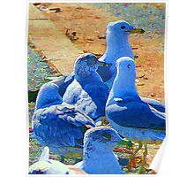 A Leader Among Gulls Poster