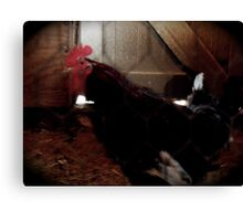 Who You Calling a Chicken? Canvas Print