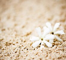 Flowers on the beach by jenheal