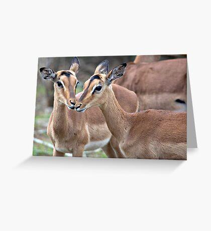 Impala Love Greeting Card