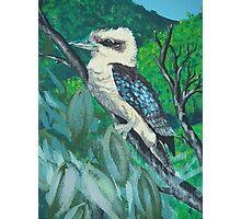 Kookaburra Mural Photographic Print
