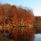 Forest Lake by Trine
