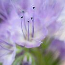 Lilac Andante by Sarah-fiona Helme