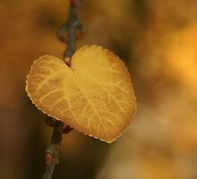 heart of gold by Fran E.
