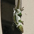Anole Shedding by JeffeeArt4u