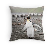 Adolescent King penguin with vest on, Macquarie Island Throw Pillow