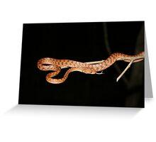 Brown Tree snake Greeting Card