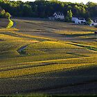Cuis vineyard sunset. by Victor Pugatschew