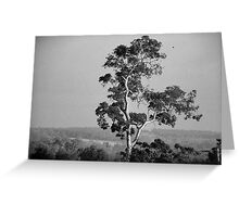 A Giant Above The Rest - Eucalyptus Tree Greeting Card