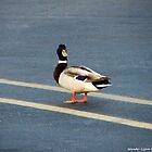 Only Duck That'll Walk The Line by Wanda-Lynn