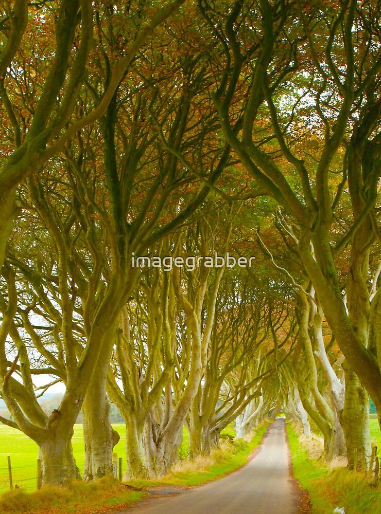 dark hedges by imagegrabber