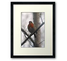 Robin Redbreast Perched on a Tree Framed Print
