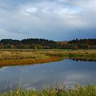 Ridgefield Washington Wildlife Refuge  by Bob Hortman
