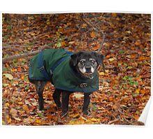 Autumn Sweetie Poster