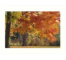 Autumn branches Art Print
