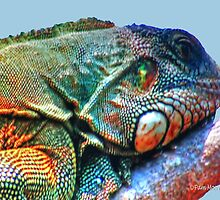 Iguana HDR by Pam Moore