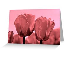 Blushing Tulips Greeting Card