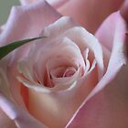 Soft Petals by plunder
