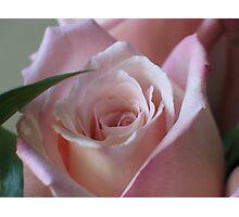 Soft Petals Photographic Print