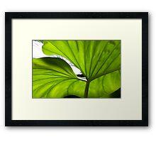 Iluminated Leaf  Framed Print
