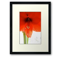 Spring for Christmas Framed Print