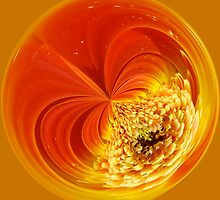 Orb, Orange Gerbera  by Jeanne Frasse