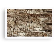'fossil' Canvas Print