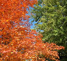 Tri-Colour Trees by MarianBendeth