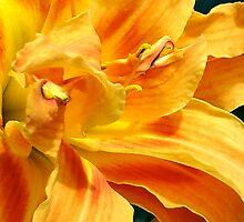 Flower by Danny Harrison