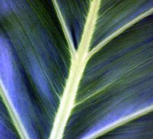 Blue Green Leaf by Haydee  Yordan