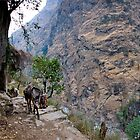 Mule train with waterfall  by Erdj