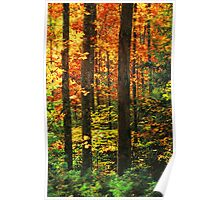 HARDWOOD FOREST,AUTUMN Poster