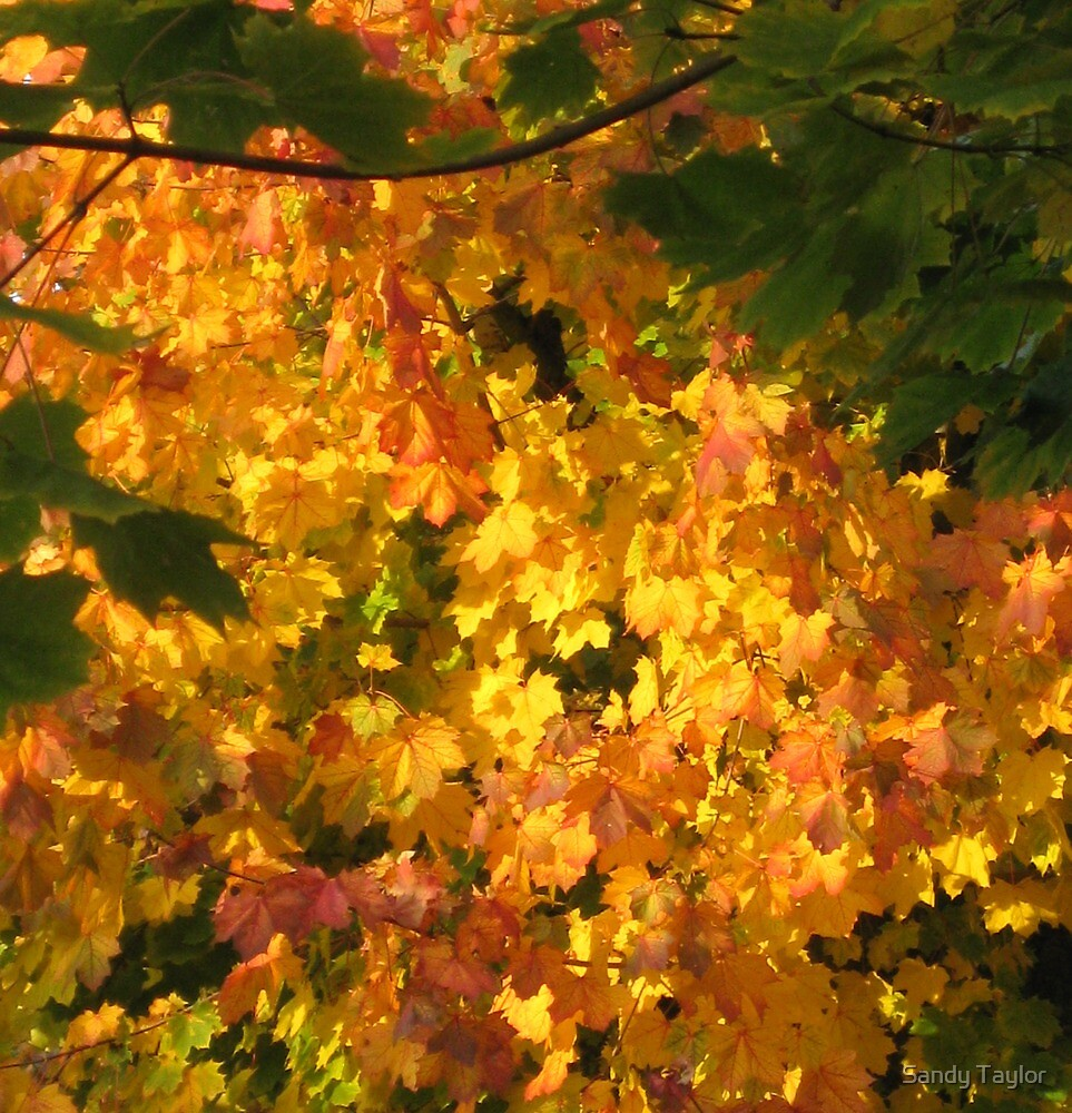 Autumn by Sandy Taylor