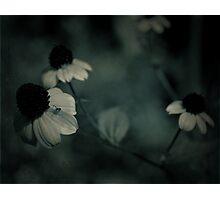 Flowery blues Photographic Print