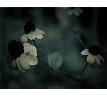 Flowery blues Photographic Print