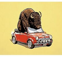 Bison in a Mini 2015 Photographic Print