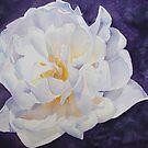 White Rose by Bobbi Price