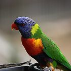 Australian Rainbow Lorikeets by Edyta Magdalena Pelc