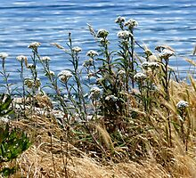 Wildflowers beside the sea by Elaine Bawden