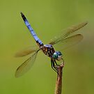 Dragonfly by Irvin Le Blanc