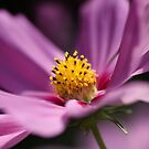 Cosmos charm by Mandy Disher
